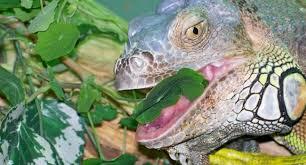 how to use arcadia earthpro omni gold food reptile centre