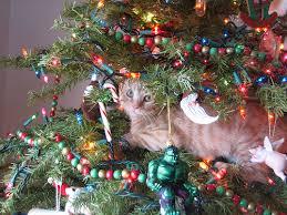 cat christmas christmas lights and cats greg kihn