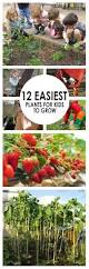 easiest plants for kids to grow best home vegetable garden ideas