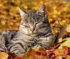 happy thanksgiving alley cat advocates alley cat advocates