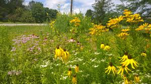 native plants of illinois lots of rain in central illinois has meant a very good year for my