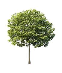 yard ornamental tree 3d model 3ds max files free