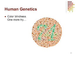 Human Color Blindness Chromosome Theory And Human Genetics Ppt Video Online Download