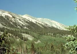 colorado rockies forests