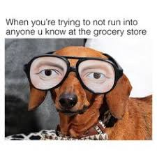 Dachshund Meme - all the monday feels dachshund memes by beangoods wiener dog