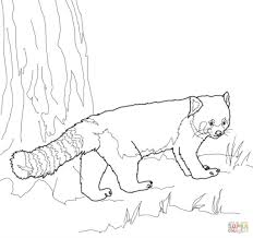 red panda coloring pages fablesfromthefriends com