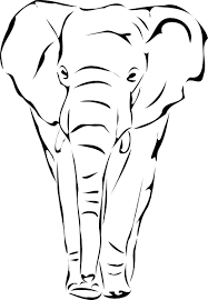 indian elephant drawing outline