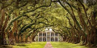 100 oak alley plantation floor plan reflections of a