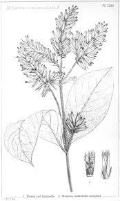 plant anatomy worksheet gallery human anatomy learning