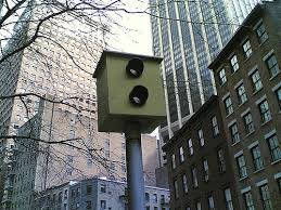 red light camera violation nyc traffic ticket becomes constitutional trial of the century