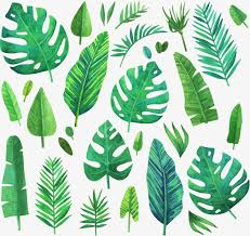 green plants watercolor green coniferous plants vector material coniferous