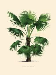 Home Decor Trees by Coastal Living Decor Tropical Palm Trees Home Decor Vintage