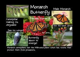monarch u2013 kids growing strong