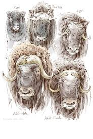 Alaska travel journal natalya zahn illustrator
