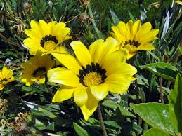 *•~-.¸¸,.-~*زهور اسلاميه*•~-.¸¸,.-~* images?q=tbn:ANd9GcQnMoneB9k0Qr1mAEvGmWv4Deqf6dB4lo0zJg2Y9dhOne7EvMHmRg