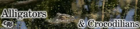 Interior Crocodile Alligator Alligators U0026 Crocodiles