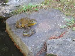 ontario frogwatch