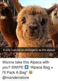 alpaca my bags meme generator style guru fashion glitz