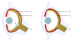 Finding Your Blind Spot In Your Eye Blind Spot Vision Wikipedia