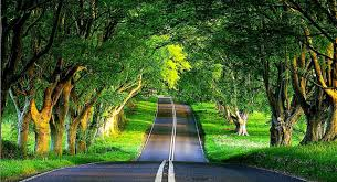 desktop backgrounds trees the road 4237218 1284x698 all
