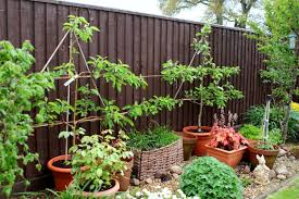 how to grow an apple tree in a container garden culture magazine