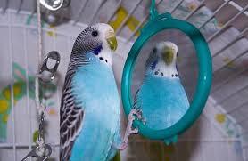 Mirror Meme - create meme parrot mirror pictures meme arsenal com