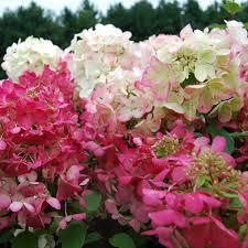 garden supplies plants u0026 accessories white flower farm