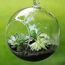 large hanging terrarium hudson and vine adding character