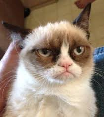 Frowning Meme - why the frown cat is frowning