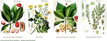 Tropical Savanna Dominant Plants - blue planet biomes plants