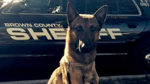 Wisconsin traveling with pets images 11 police dogs have died of heat exhaustion this summer 9 were jpg