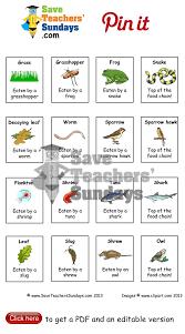 food chain cards go to http www saveteacherssundays com science