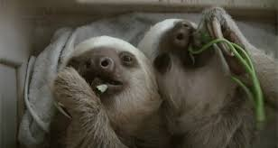 7 sloths that how you feel post thanksgiving cus