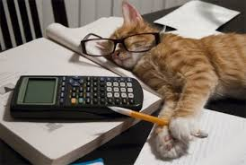 imagenes viernes trabajando gata negra gato blanco el paso de estudiante a trabajar