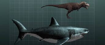 biggest megalodon shark 5 things we know about megalodon the largest shark in the world