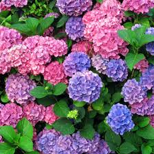 Climbing Plants That Flower All Year - perennials at the home depot