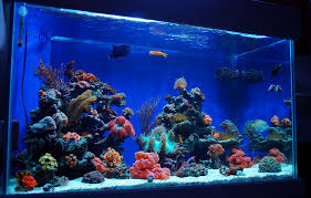 Fish Tank Reception Desk How To Layout And Design The Perfect Waiting Room
