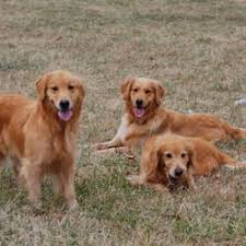 Creature Comforts Pet Sitting Creature Comforts Pet Sitting 2735 Rocky Ford Rd Newton Nc