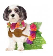 Big Dog Halloween Costume Halloween Dog Costume Ideas 32 Easy Cute Costumes