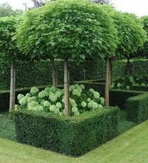 best 25 topiaries ideas on topiary plants planters
