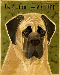 english mastiff print by john w golden print 8