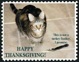 bailed out cats celebrate thanksgiving on another level