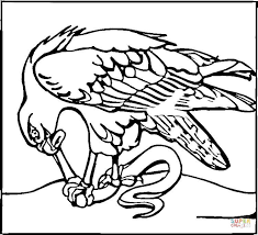 hawk eats snake coloring free printable coloring pages