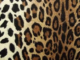 vtg plush velveteen cheetah animal print fabric over 2 yards