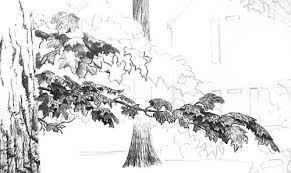 drawn leaf leaf branch pencil and in color drawn leaf leaf branch