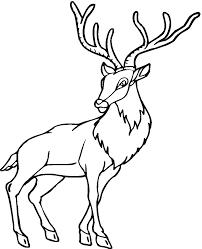 deer coloring pages printable for kids coloringstar