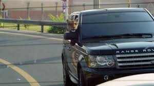 land rover dubai animals in cars news it u0027s a tiger riding in a land rover 2011