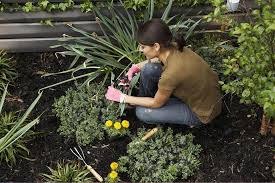 knowing when and how to prune your plants