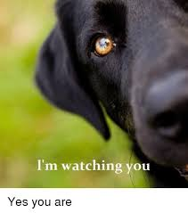 I M Watching You Meme - i m watching you yes you are meme on me me