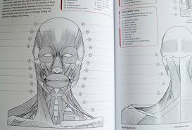 free anatomy coloring pages image collections human anatomy learning